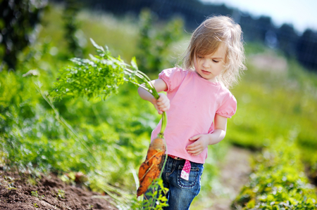 eating in the garden: Adorable little girl picking carrots in a garden Stock Photo