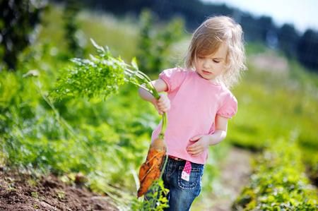 Adorable little girl picking carrots in a garden Stockfoto