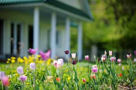 大きな家の前に美しい色とりどりのチューリップ 写真素材