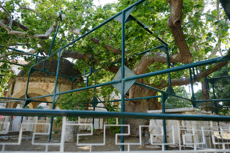 hippocratic: Plane Tree of Hippocrates in Kos town. Greece