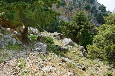 flora: Beautiful flora of Kos island in Greece