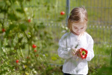 bush pepper: Adorable little girl picking peppers in a garden Stock Photo