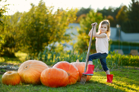 pumpkin patch: Adorable little girl with a pitchfork on a pumpkin patch Stock Photo