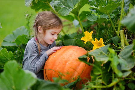 Cute little girl hugging a pumpkin in a pumpkin patch Stock Photo