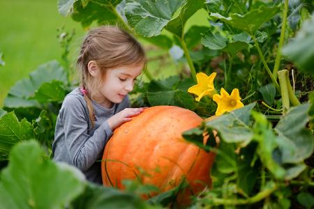 pumpkin patch: Cute little girl hugging a pumpkin in a pumpkin patch Stock Photo