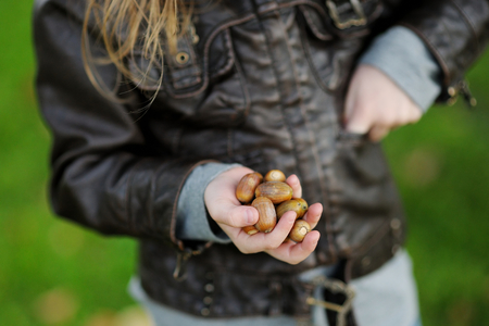 crafting: Little girl gathering acorns for crafting and playing Stock Photo