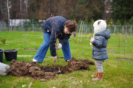 planting a tree: Adorable little girl and her grandmother planting a tree