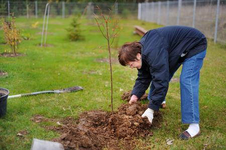 plantando un arbol: Una mujer de plantar un árbol en un muelle