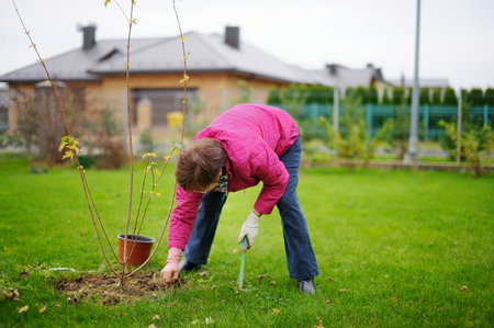 autumn garden: A woman planting a tree on a spring Stock Photo