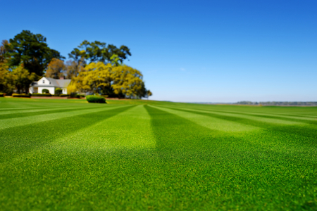cut the grass: Perfectly striped freshly mowed garden lawn in summer Stock Photo