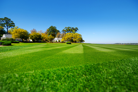 Perfectly striped freshly mowed garden lawn in summer Фото со стока