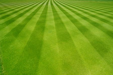 Perfectly striped freshly mowed garden lawn in summer Standard-Bild