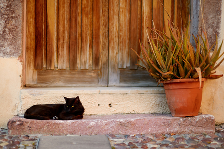 Big black cat laying by a doorstep Stock Photo