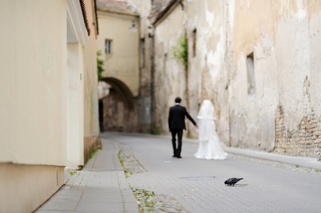 pecks: Pigeon pecks while bride and groom walking away in a background Stock Photo