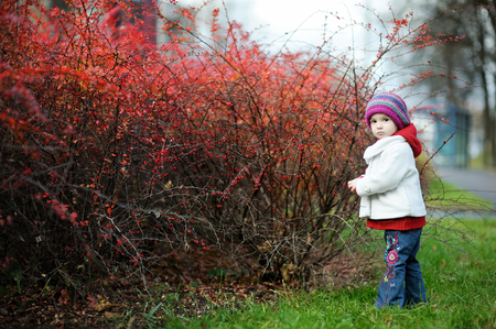 barberry: Adorable toddler in barberry bushes on beautiful autumn day
