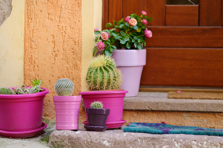 doorstep: Cactuses in colorful pots by a doorstep in italian town