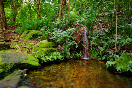 kauai: Mountain river or stream at Kalalau trail, Kauai, Hawaii