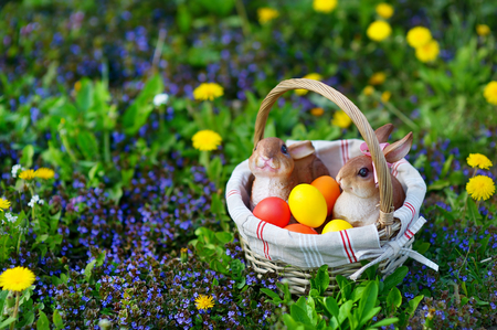 huevo blanco: Coloridos huevos de Pascua en una cesta en una hierba con dos conejitos