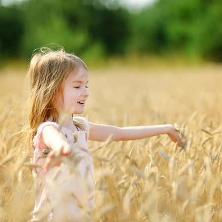 Adorable preschooler girl walking happily in wheat field on warm and sunny summer day photo