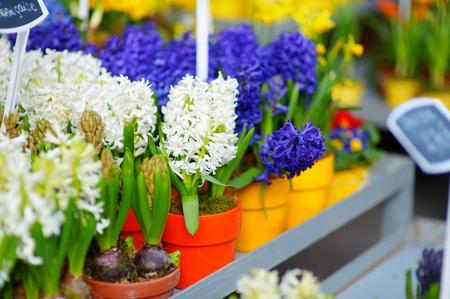 sidewalk sale: Beautiful colorful flowers sold on outdoor flower shop in Paris, France