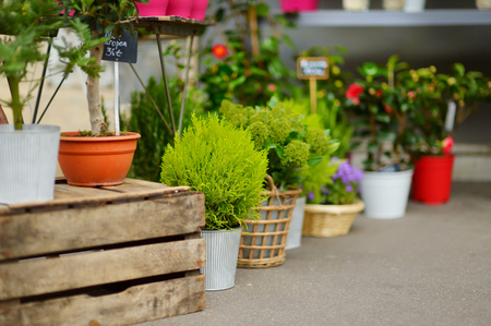 flower pots: Beautiful colorful flowers sold on outdoor flower shop in Paris, France