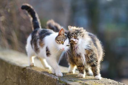 dva: Dva přátelské kočky na jaře