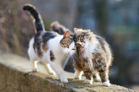 purring: Two friendly cats on spring Stock Photo