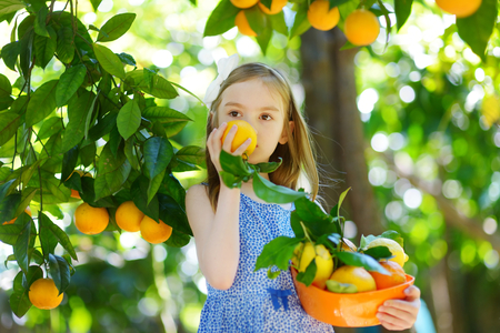 Aanbiddelijk meisje die verse rijpe sinaasappelen in zonnige oranje boomtuin plukken in Italië