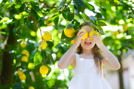 limón: Adorable niña recogiendo limones maduros frescos con limón soleado jardín de árboles en Italia