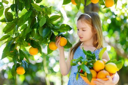 Schattig klein meisje het plukken verse rijpe sinaasappelen in zonnig oranje boom tuin in Italië