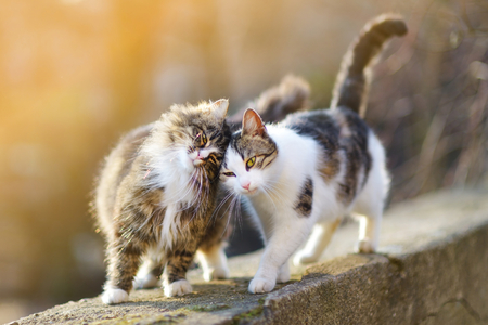 cute kitty: Two friendly cats on spring Stock Photo