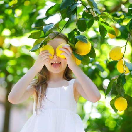 lemon: Adorable little girl picking fresh ripe lemons in sunny lemon tree garden in Italy Stock Photo