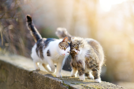 two animals: Two friendly cats on spring Stock Photo