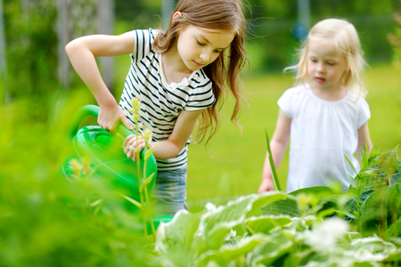 watering garden: Two adorable happy little girls watering plants and flowers in the garden on warm and sunny summer day