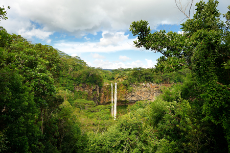 jungle: Scenic Chamarel falls in jungle of Mauritius island
