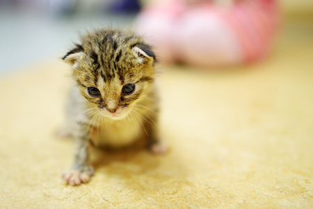 orphan: Cute little orphan kitten at home Stock Photo