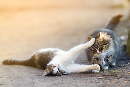 purring: Two playful cats on warm spring day