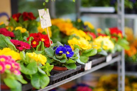 sold small: Beautiful colorful flowers sold in outdoor flower shop in small town in Germany