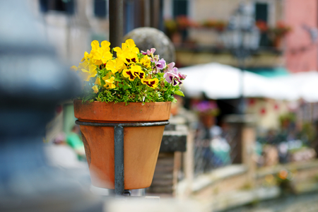 doorstep: Variuos plants and flowers in colorful pots by a doorstep in typical italian town