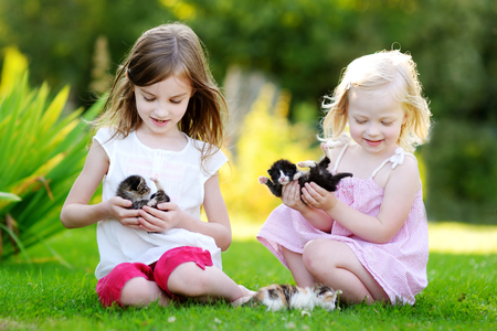 affectionate: Two adorable little sisters playing with small newborn kittens on beautiful sunny summer day outdoors