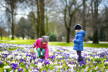 Two little sisters picking crocus flowers on beautiful blooming crocus meadow on early spring