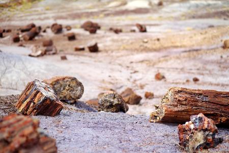 petrified fossil: Stunning petrified wood in the Petrified Forest National Park, Arizona, USA