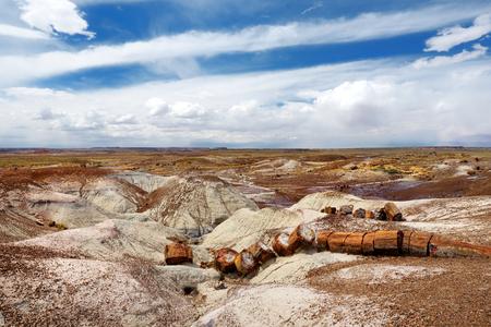 petrified: Stunning petrified wood in the Petrified Forest National Park, Arizona, USA
