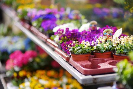 Beautiful colorful flowers sold in outdoor flower shop in small town in Germany