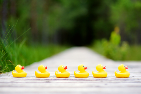to the other side: Six rubber ducklings crossing the street to get to the other side Stock Photo