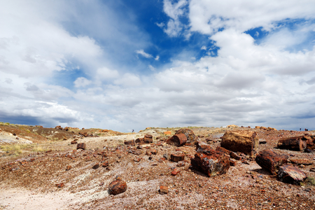 Stunning petrified wood in the Petrified Forest National Park, Arizona, USA