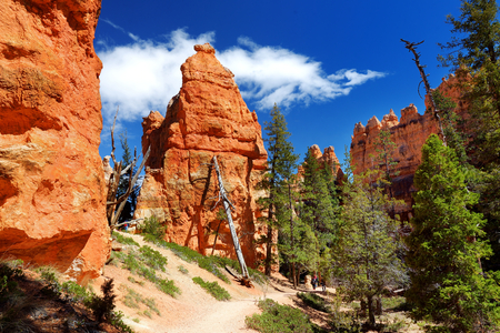 Scenic view of stunning red sandstone hoodoos in Bryce Canyon National Park in Utah, USA