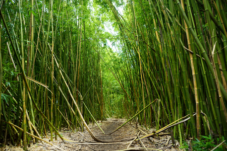 Path through a tall bamboo forrest leading to a waterfall on the Road to Hana on Maui, Hawaii, USA