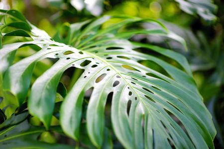 Lush tropical vegetation of the islands of Hawaii, USA