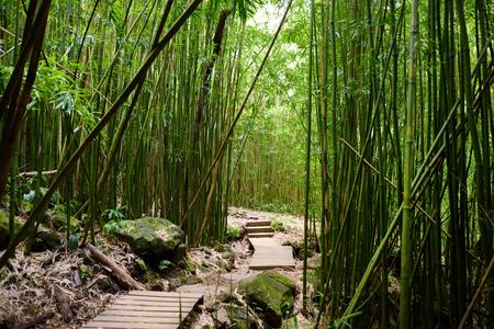 조밀 한 대나무 숲을지나 유명한 Waimoku 폭포로 이어지는 길. 마우이, 하와이, 미국에서 Haleakala 국립 공원에서 인기있는 Pipiwai 흔적